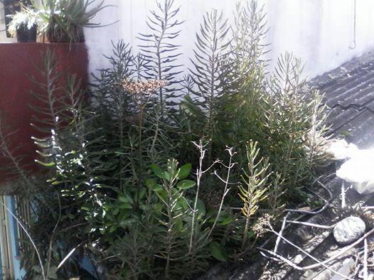 plantas-en-el-techo
