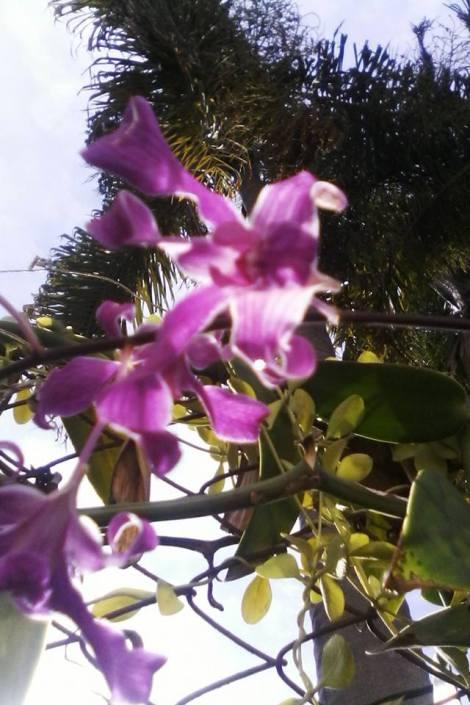 flor-3