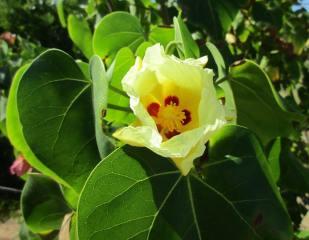 flor-abierta