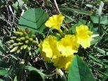 flor-amarilla