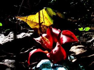 flor-majagua