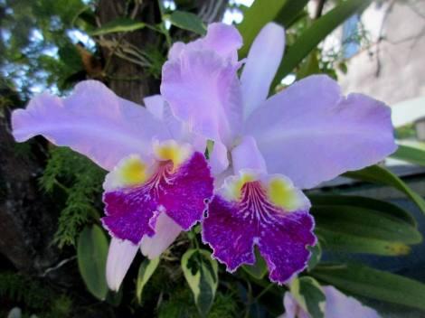 orquidea-11