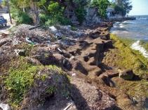 Recalo de basuras y algas en antigua Playa Marazul ya sin arenas