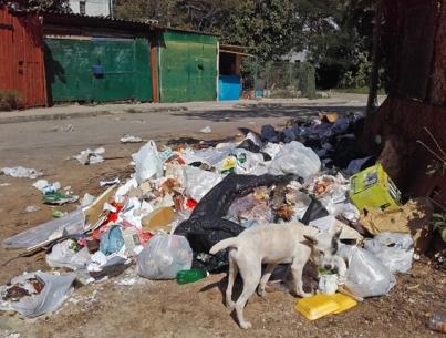 Basura en La Habana - perro