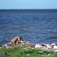Los terribles efectos del calentamiento global en Cuba