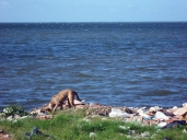 Vista de la bahía de Buenavista (o de Perros, como también se le conoce)