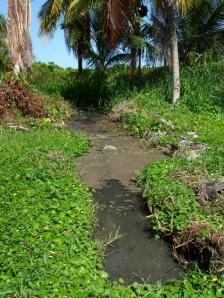 Zona vecinal inundada por laguna de oxidación cercana