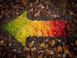 autumn-leaves-rainbow