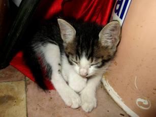 gato 3