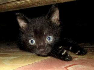 gato 5