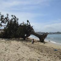 El árbol y el mar