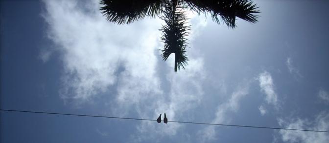La palma y el ciclón