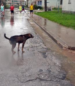 sed-de-perros-(1)