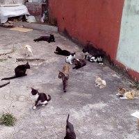 Matanza de gatos en La Habana