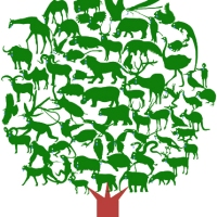 Conexión Humana para la revitalización forestal