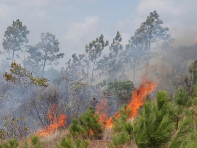 Cuba: Especialistas advierten incremento de incendios en 2018