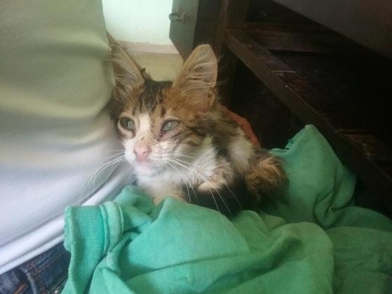 1.-Un-gato-que-recogí-la-cara-del-abandono