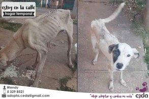 Promoción-de-CEDA-Cubanos-en-Defensa-de-los-Animales