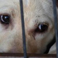 Por qué Cuba necesita una Ley de Protección Animal