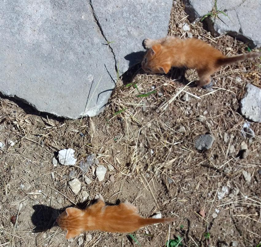 gatos-guardabosques-1.jpg