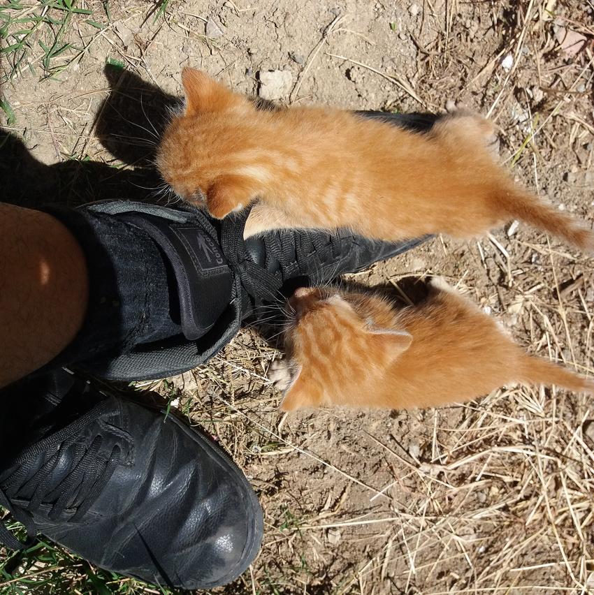 gatos-guardabosques-2.jpg